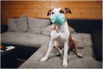 Coronavirus: tips to care and entertain your pet during isolation